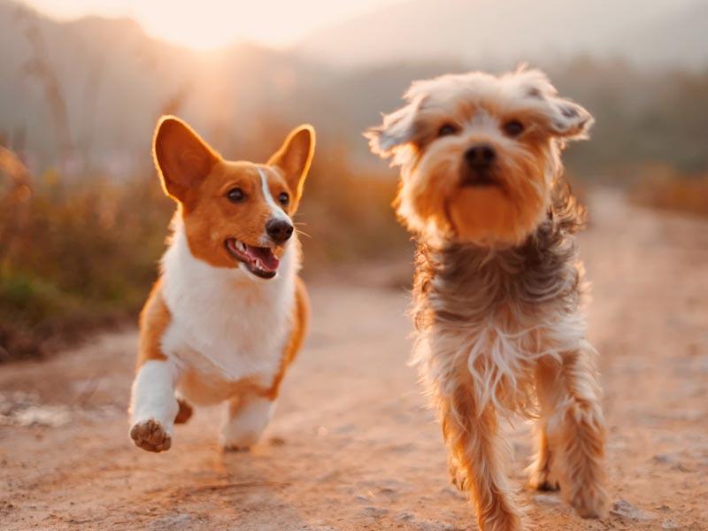 Crecimiento saludable y sano gracias a las proteinas del pienso para perro