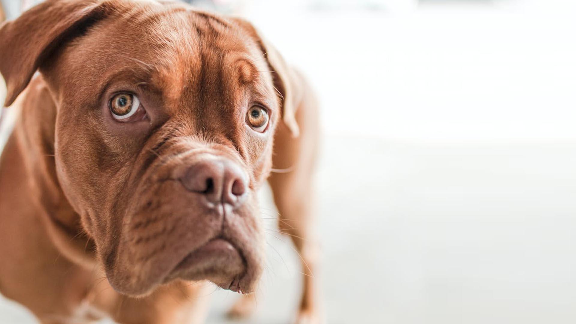 Contacta con mydogcares alimentacion natural para perros