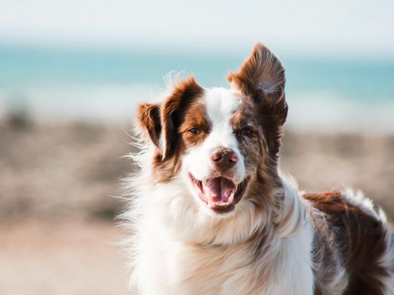 Pelaje sano y brillante gracias a los nutrientes del pienso para perro